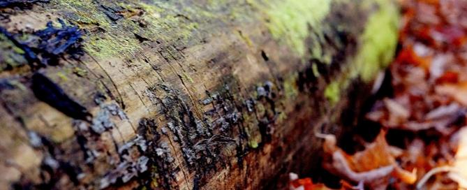 Blog de Norma Doors- Los benficios de la madera en tu vida