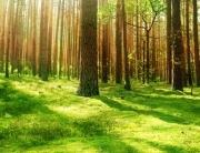Puertas Norma Doors apuesta por la sostenibilidad